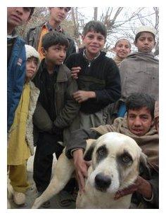 Framed Brameld Achin dog 1