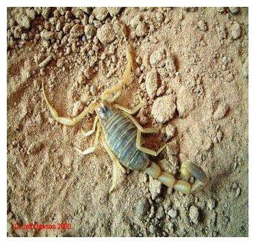 Framed AmFirst WILD scorpion. jpg