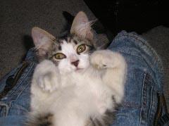 Mycat