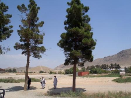 Framed AfghaniDan COMMANDO 8a
