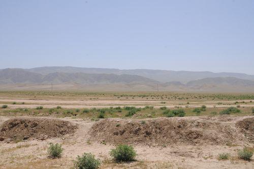 Framed Afghan Fox CHEMTAL plains