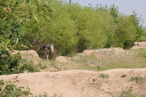 Framed ABF CHEMTAL 4 donkey