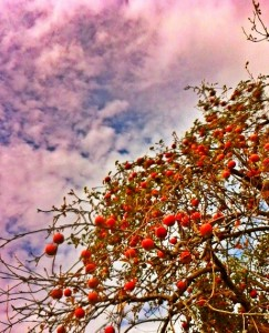Framed MCGEE Apples