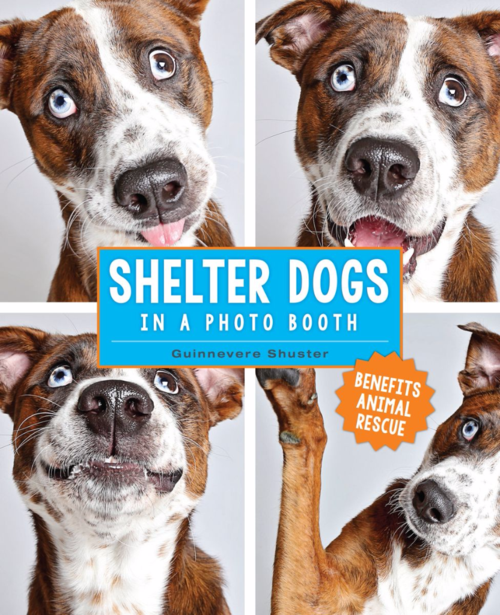 Shelter Dogs in a Photo Booth by Guinnevere Shuster