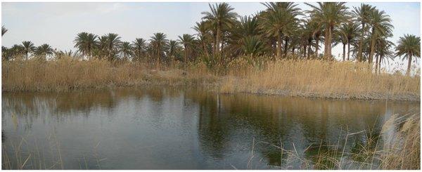 Framed_goforth_hi_oasis2
