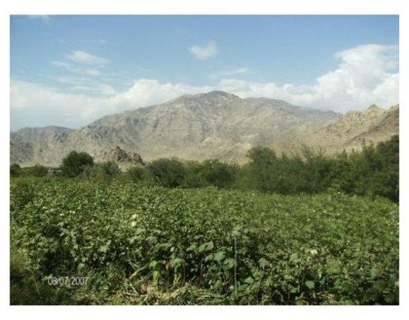 Framed_old_blue_afghanistan_can_2
